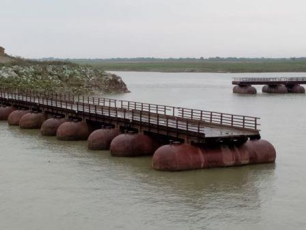 नवगछिया : कोसी नदी के जल स्तर में वृद्धि